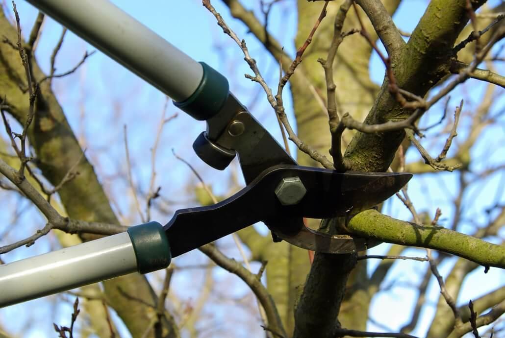Äste schneiden hilft gegen Zecken im Garten