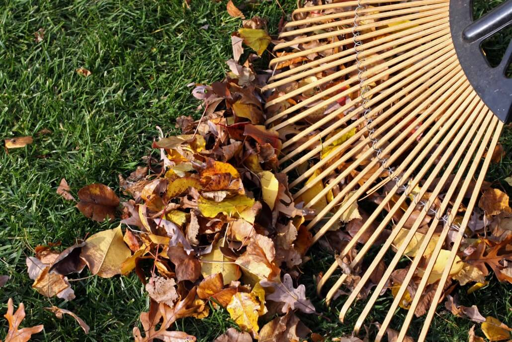 Was tun gegen Zecken im Garten? Man kann die Blätter entfernen.