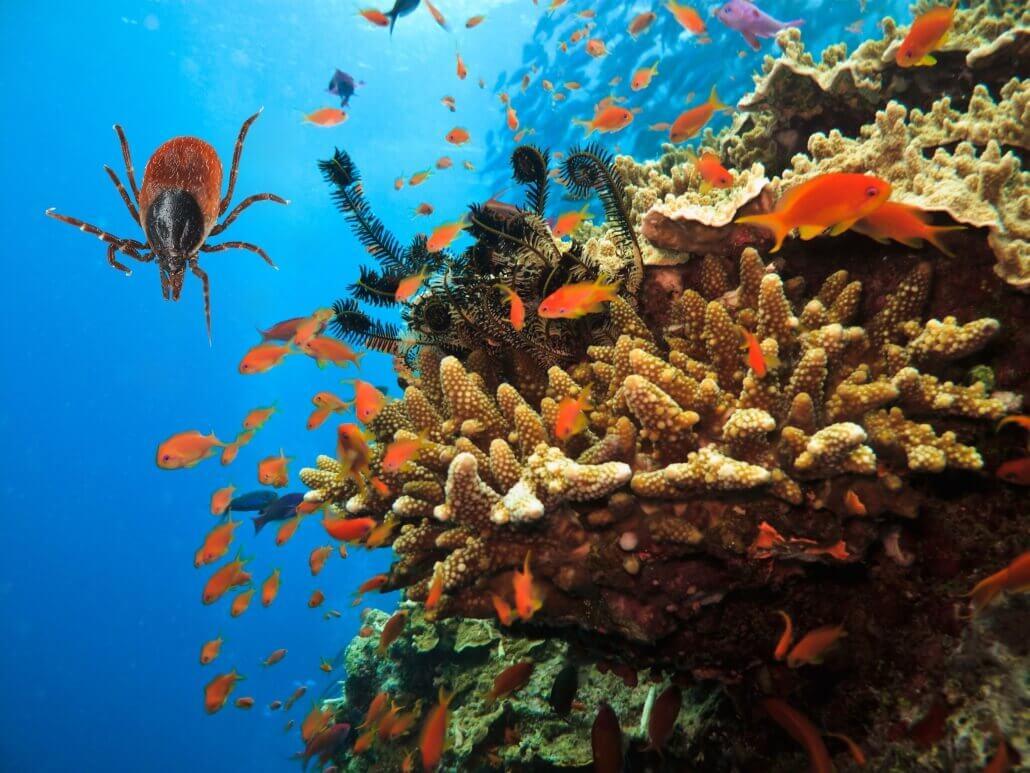 Zecke unter Wasser